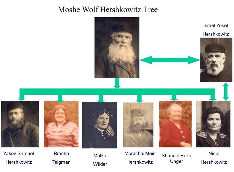Hershkowitz Tree 1